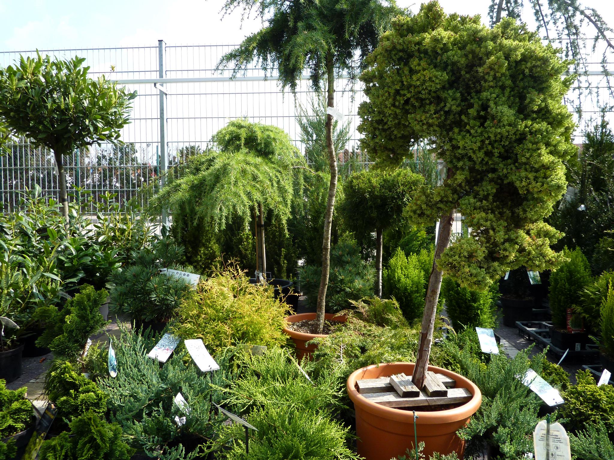 gartenpflanzen - gärtnerei unflath - Gartenpflanzen