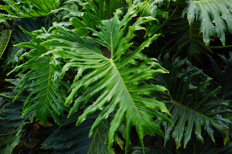 Gr npflanzen f r ein sch nes zuhause g rtnerei unflath for Zimmerpflanzen dekorativ