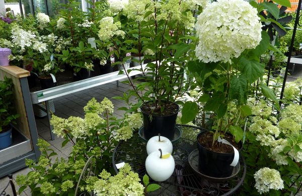 Blumensortiment aus Ihrer Gärtnerei Unflath in Wemding